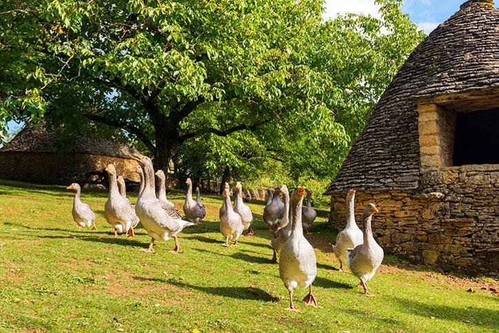 Séjour au vert en Dordogne Périgord